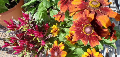Bring Your Porch or Garden to Life With Late Summer & Fall Plants