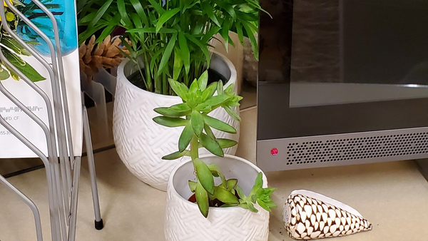 3 Things to Keep in Mind When Choosing Office Plants