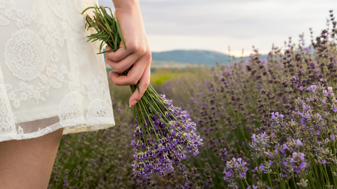 7 Benefits of Growing Lavender