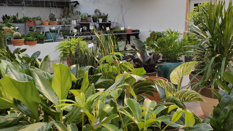 Flower Works—Your Tropical Plant Experts