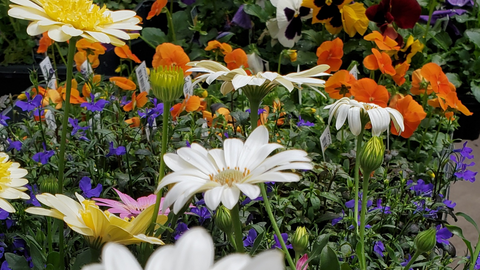 Kickstart the 2021 Gardening Season With a Tailored Selection of Annuals and Perennials
