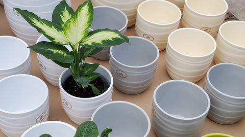 Are All Plant Containers the Same?