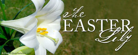 How the Easter Lily Grew to Symbolize the Season