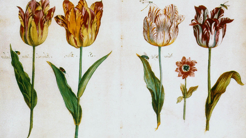 Why Tulips Are the Perfect Midwinter Gift