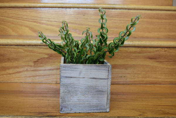 Succulent in a wooden cube pot cover