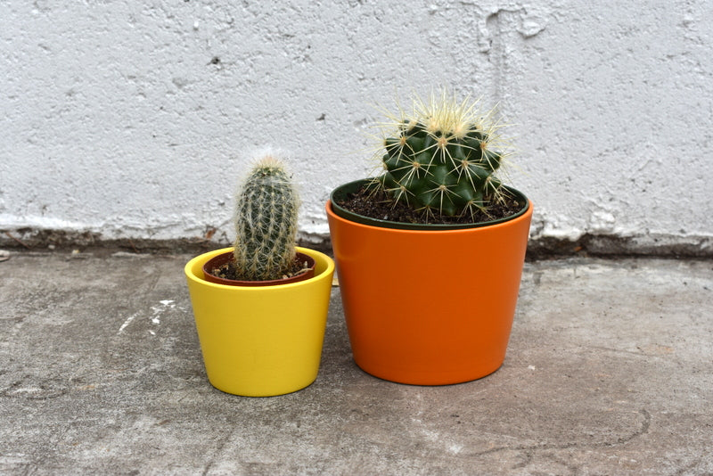 "Variety of cacti sizes with SK ""Dallas"" pot cover"