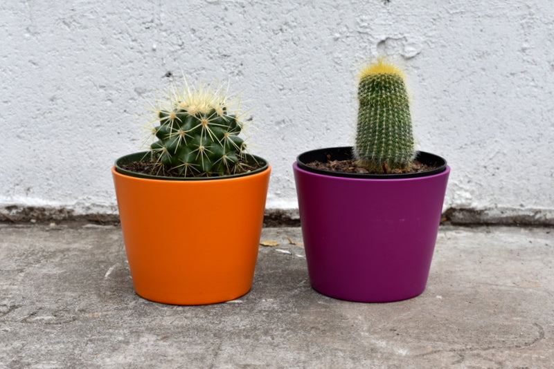 "Pair of cacti in a SK ""Dallas"" pot cover"