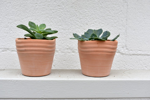 "Pair of two inch succulents in a SK ""Palma Terra"" pot cover"