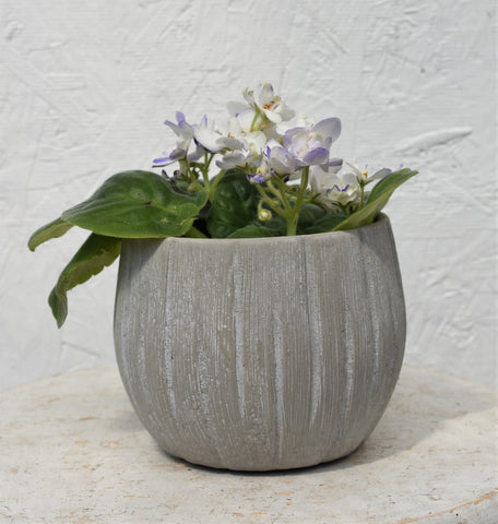 "African violet in a SK ""Rondo"" pot cover"