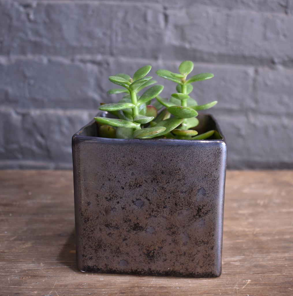 "Jade in an Accent Decor ""Lara"" cube pot cover"