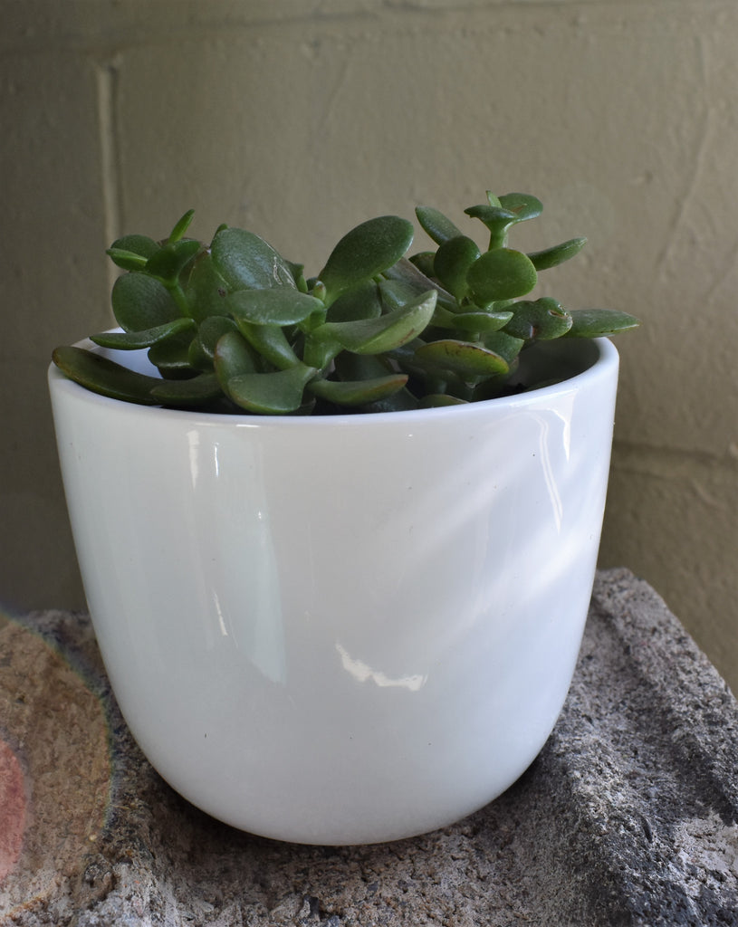 "Jade in a SK ""Sevilla"" pot cover"
