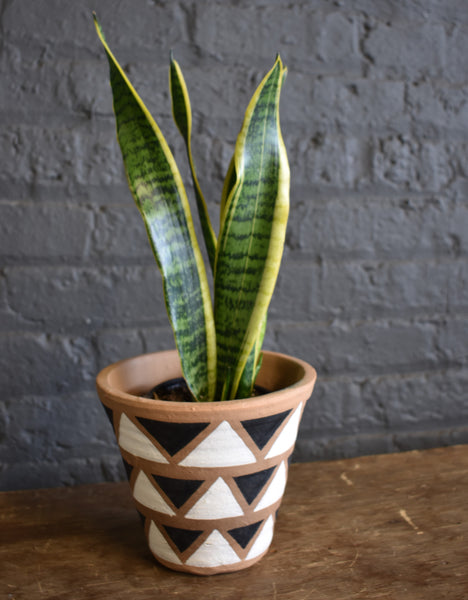 "Sansevieria in an Accent Decor ""Navajo Triangle"" pot cover"