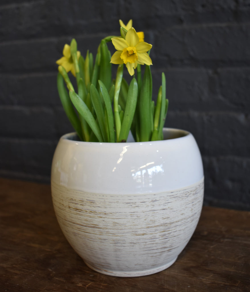 "Daffodil in a SK ""Alberta"" pot cover"