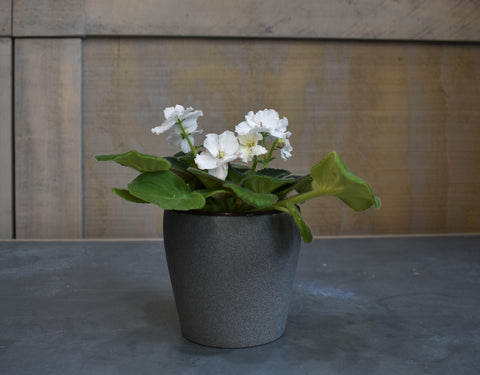 African violet with a pot cover