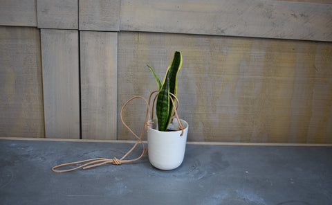"Sansevieria in a SK ""Doni"" haning pot cover"