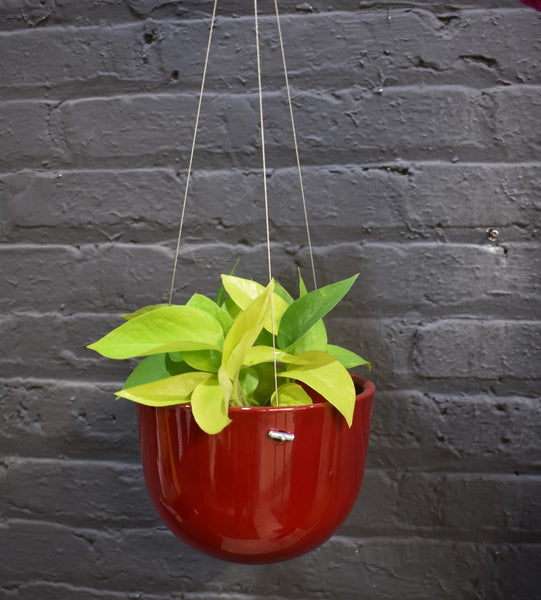 "Pothos in a SK hanging ""Basel"" pot cover"