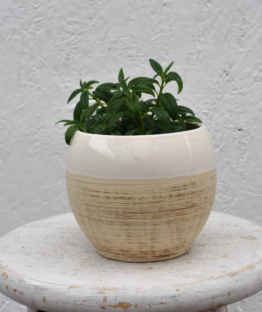 "Goldfish plant in a SK ""Alberta"" pot cover"