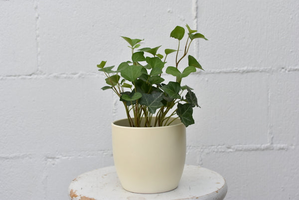 "English ivy in a SK ""Basel"" pot cover"