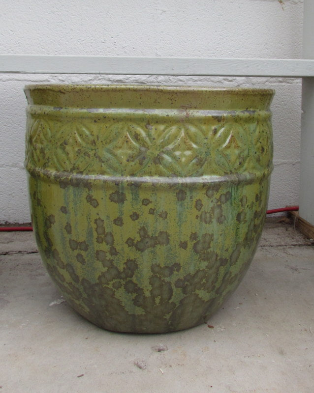 Kousa planter in tropical avocado