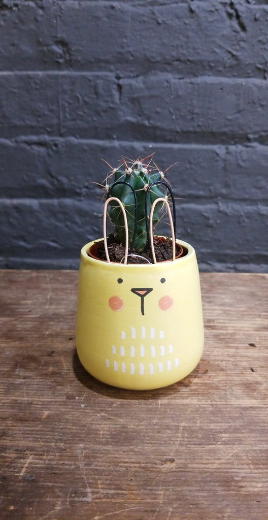 "Accent Decor ""Sunny Bunny"" Pot w/ 2"" Plant"