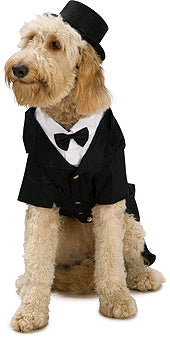DAPPER DOG PET COSTUME - SIZE XL