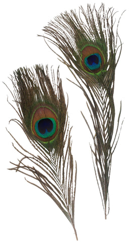 Single Peacock Feathers - 2pc Pack
