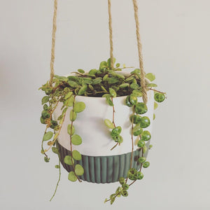 "4"" String of Turtles in Hanging Ceramic Pot"
