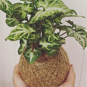 Kokedama Re-wrap