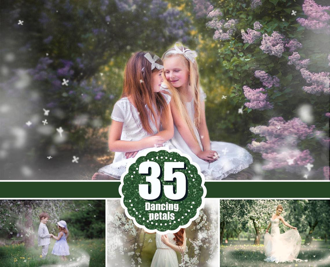 35 Wight Blossom petals, spring summer orchard overlays, Photosho overlay, Painted Photo frame, Dancing Rose Flower Falling Petals, png