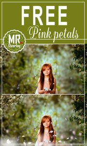 FREE pink white falling petals Photoshop overlays
