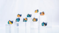 DUNU Studio SA6 In-Ear Monitors **IN STOCK**