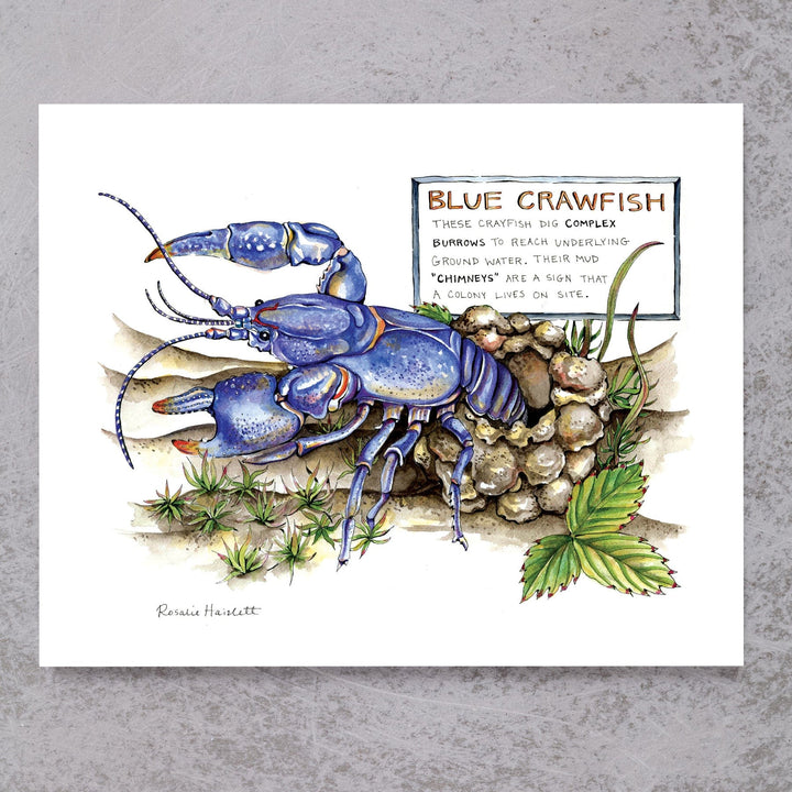 Blue Crawfish