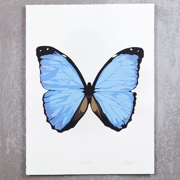 Blue Morpho on White