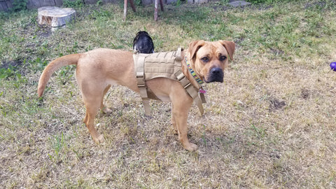 dog harness tactical