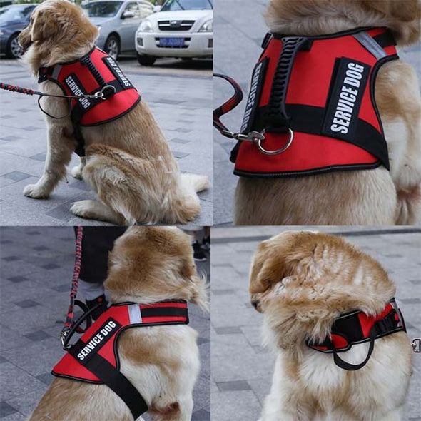 No Pull Explosion-proof Harness