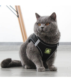 Summer Mesh Cat Harness with Leash