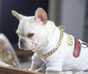 Golden Collar Chain For Pets