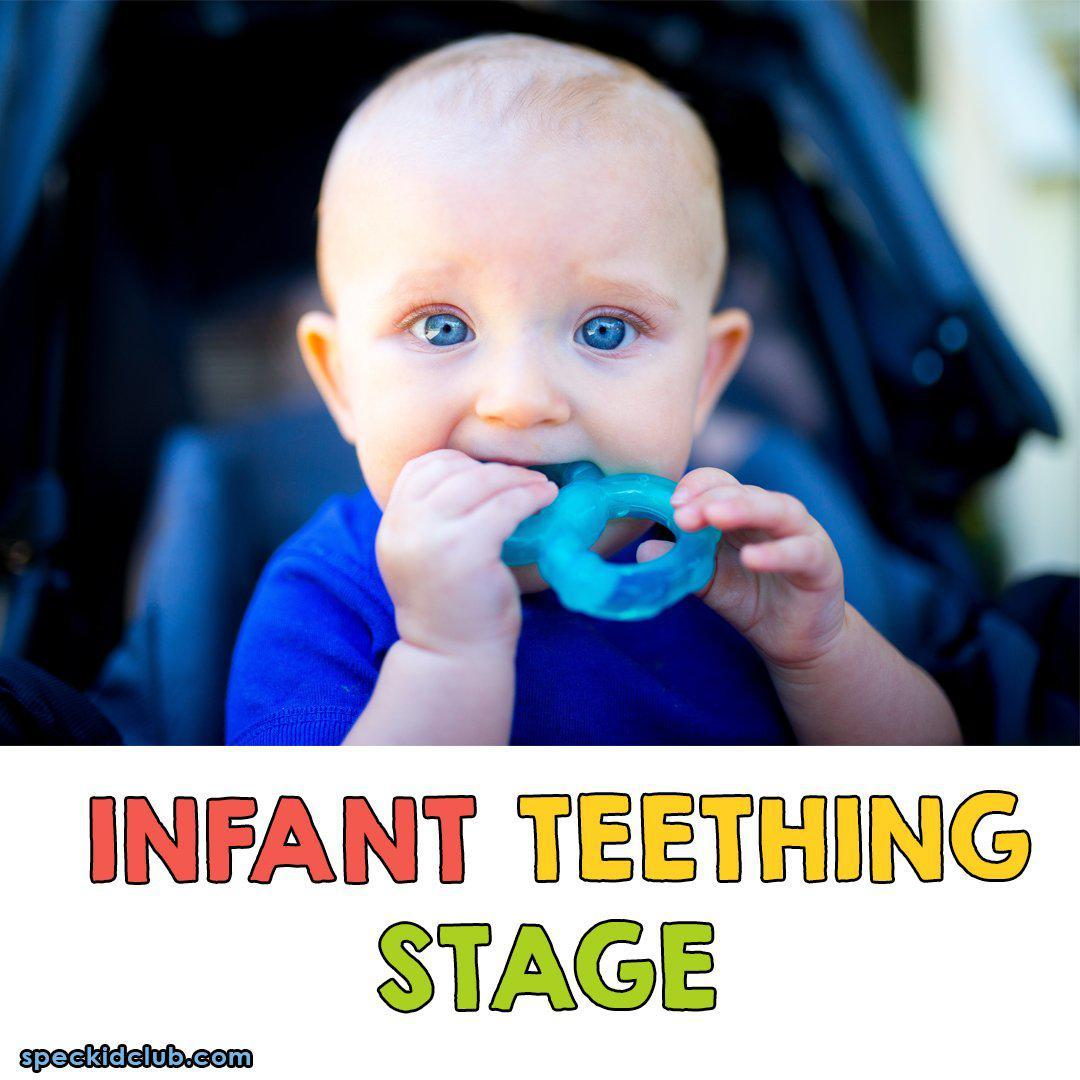 The Developing Child: Infant Teething Stage