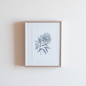Illustrated Peony Print