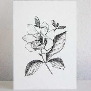 Illustrated Magnolia Art Print