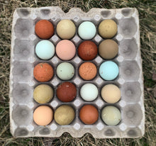 Rainbow Egg Layer Assortment