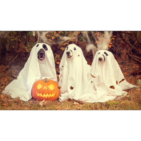 Image of Trick a Treat Puppies - DIY 5D Diamond Painting - Full Drill-EasyWhim