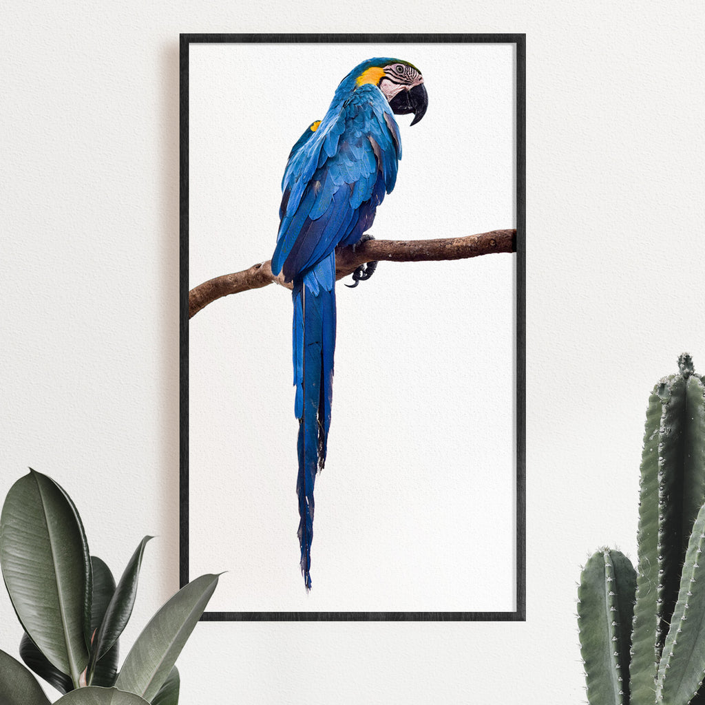 Blue Parrot Photographic Print