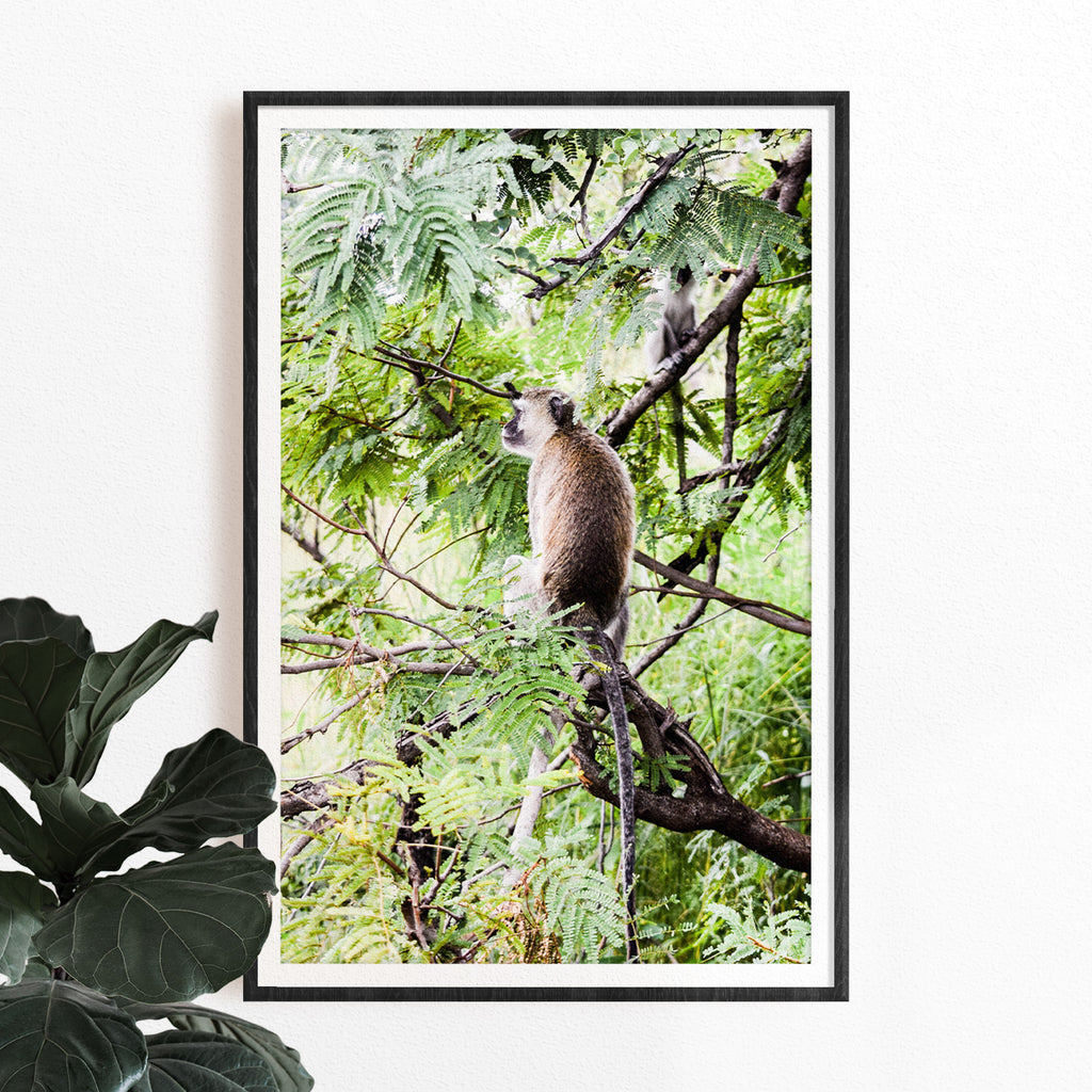 Monkey with Leaves Photographic Print