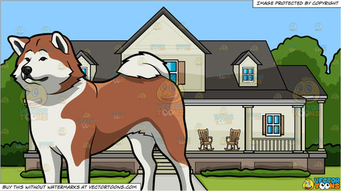 A Beautiful Akita Dog and A House With Big Front Porch Background