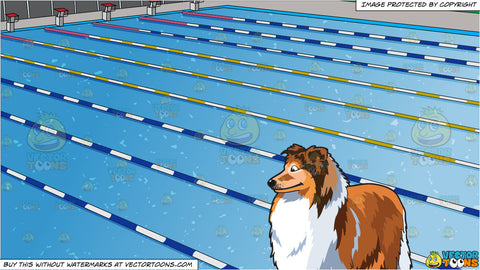 A Beautiful Collie and Outdoor Competition Swimming Pool Background