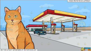 A beautiful orange cat and A Gas Station On The Outskirts Of Town Background