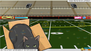 A Black Cat In A Box and Empty Football Stadium Background