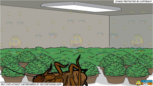 A Dead roach and A Grow Room Full Of Potted Plants Dead House Plants Room on dead plant cartoon, dead finger plant, dead angel plant, dead flower, dead gardenia plant, dead office plants, dead orchid plant, dischidia plant, dead horse plant, money tree plant, dead rose plant, dead cannabis plant, dead palm plant, dead fern, dead planet, a dead plant, healthy plant dead plant, dead potted plant, dead plants in pots, dead corpse plant,