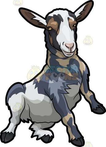 A dirty goat